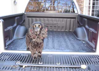 DualLiner Bedliner is pet friendly
